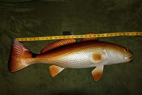 Salty Pelican Realistic Redfish Replica Mount 28 inches, Poly-Resin Raised - Pelican Replica