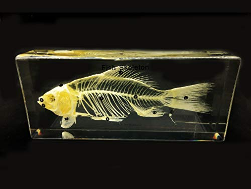 Real Fish Skeleton Specimen in Acrylic Block Paperweights Science Classroom Specimens for Science Education(7.9x3.5x1.6 inch)