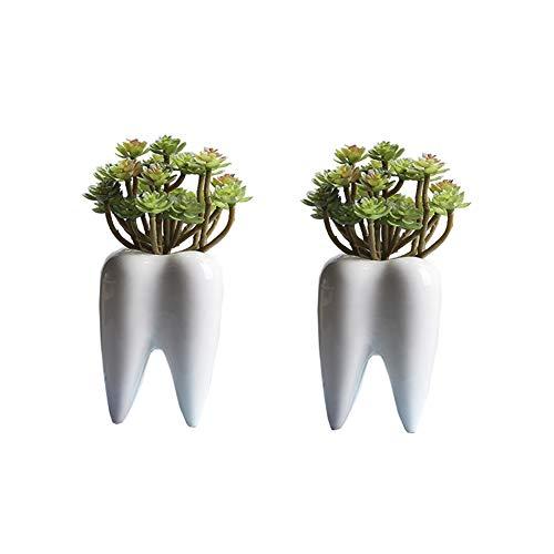 Youfui Home Decor Pot, Succulent Planter Flowerpot Decor for Home Office Desk (2pcs Funny Tooth Pots) ()