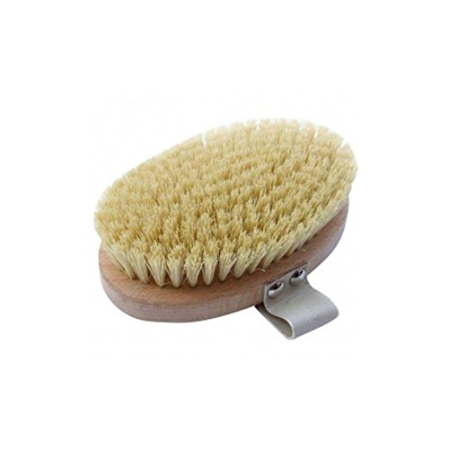 Hydrea London Beech Wood Body Brush With Cactus Fibre Bristles (Pack of 6) by Hydrea London (Image #1)