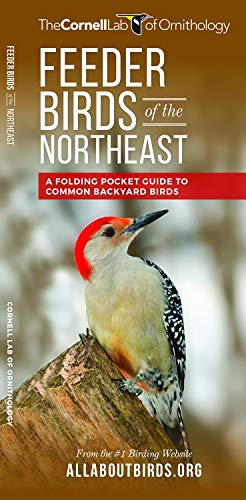 Feeder Birds of the Northeast: A Folding Pocket Guide to Common Backyard Birds (All About Birds Pocket Guide Series) (Star Pocket Ri)