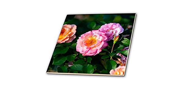 Summer Joy and Beauty 3dRose Alexis Photography Sunlit Pink Rose Flowers Bright Green Leaves Flowers Roses T-Shirts