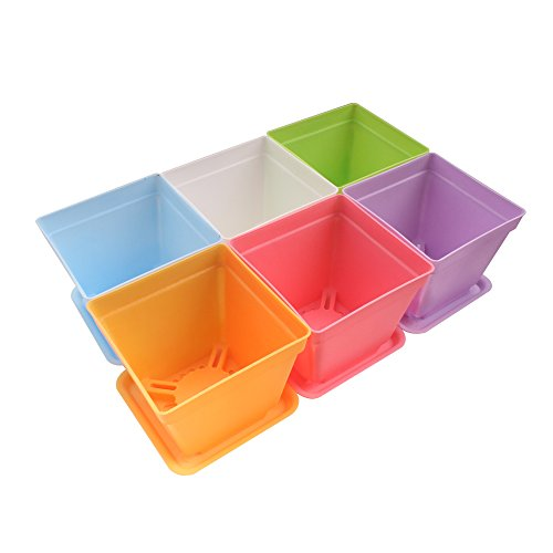 Orange Mini Dish (Zicome Set of 6 Colorful Square Plastic Pots and Saucers for Plants, 4 x 4 x 3.5 Inch)