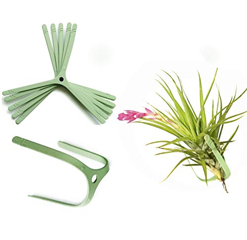 ArtAK 5 Pcs Wall Planter Air Plant Holder Hanging AIR Knots | Modern Metal Mount Planters for Large Tillandsia & Orchid Display | Vertical Garden Houseplant Decor | Indoors and Outdoors Green
