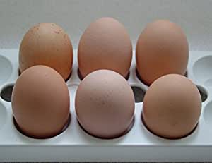 One-Half Dozen Farm Fresh Fertile Free Range Chicken Eggs