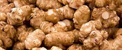Jerusalem Artichokes - 2 1/2 pounds (2.5 lbs) AKA Sunchokes, Sunroot or Jerusalem Artichokes for Planting or Eating FedEx 2DAY