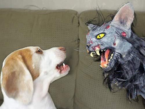 Cute Dog vs. Zombie Cat]()