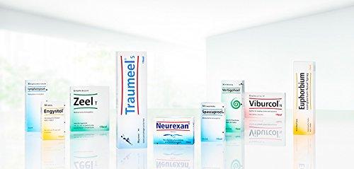 HEEL Cerebrum Compositum 100 Amps Homeopathic Remedies Medicines by Heel Inc.