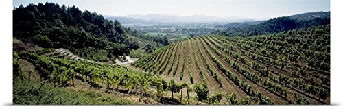 great-big-canvas-poster-print-entitled-vineyard-newton-vineyard-st-helena-napa-valley-napa-county-ca