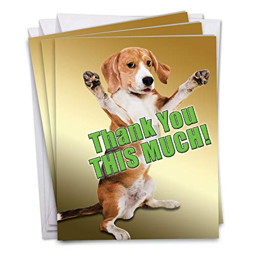 3 Pack of Jumbo - This Much Dog Thank You Greeting Card with Envelope 8.5 x 11 Inch - Beagle Pup Paws, Puppy Hug, Embrace - Personalized Animal Stationery for Thanks, Appreciation J2232TYG3