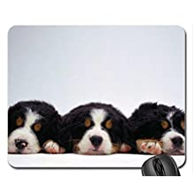 (mouse pad) Bernese Mountain Dog Puppies Mouse Pad, Mousepad (Dogs Mouse Pad) Sold by Yanteng