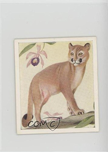Puma (Trading Card) 1936 Godfrey Phillips Animal Studies - Tobacco [Base] #23 (Card Phillips Tobacco)