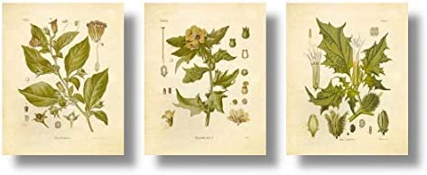 picture of Botanical Prints Vintage Wall Art Magical Herbalism Witchcraft Herbs – Set