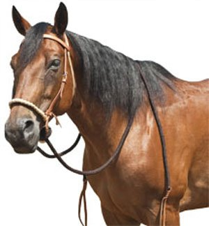 Mustang Round Braided Noseband Breaking Hackamore