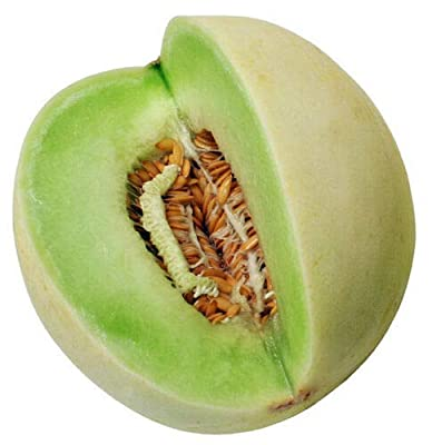 1/2 oz Honeydew Melon Seed, Green Melons, Heirloom Melon Seed, Non-GMO About 500