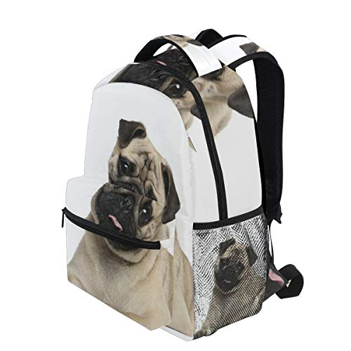 KVMV Nine Months Old Pug Puppy Lying Around Cute Pet Funny Animal Domestication Bag