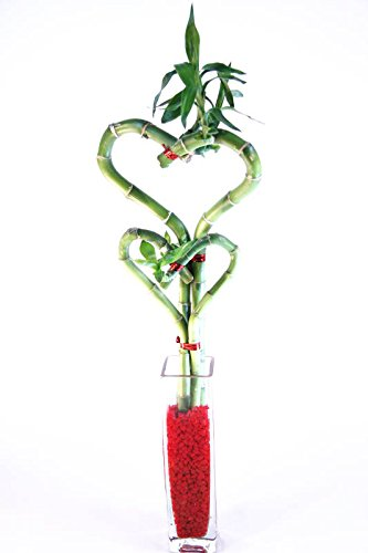 Red Rectangular Vases - Athena's Garden BA-HS08HS12-CG001-RRSM Clear Vase and Red Rock Tree, One Size, Green, red and white
