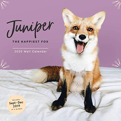 Juniper: The Happiest Fox 2020 Wall Calendar