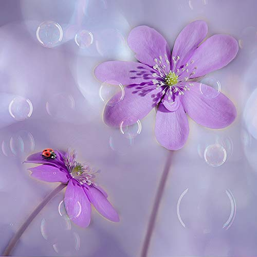 Photography Poster - Hepatica, Soap Bubbles, Ladybug, 24
