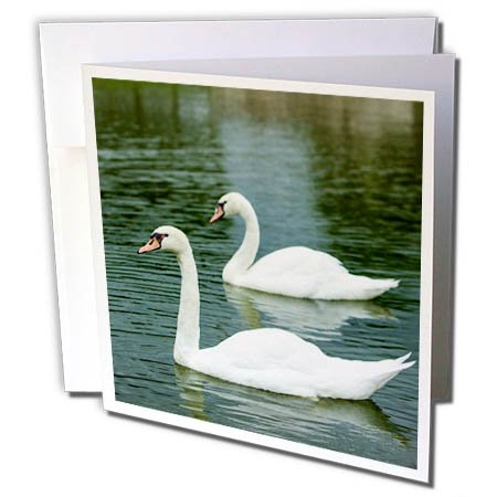 3dRose Danita Delimont - Swans - Swans in a pond at Chateau Villandry near Tours, Loire Valley, France - 1 Greeting Card with envelope (gc_277364_5) - Villandry Chateau