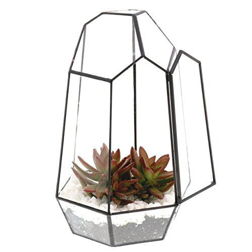 Barnyard Designs Watertight Glass Terrarium Succulent Plant Container Geometric Irregular Prism Shape Tabletop Decor 6'' x 10'' (Black) by Barnyard Designs