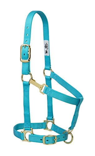 Weaver Leather Basic Adjustable Nylon Halter, Turquoise, 1