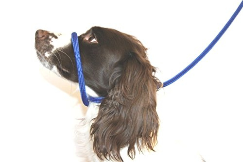 Dog & Field Figure 8 Anti Pull Lead/Halter / Head Collar- One Size Fits All - Super Soft Braided Nylon - Fitting Instructions Included - Comfortable, Kind, Supple, Secure No More Pulling! (Blue)