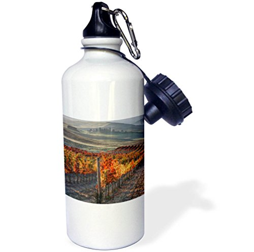 3dRose Danita Delimont - Vineyards - Italy, San Quirico, Autumn Vineyards near San Quirico - 21 oz Sports Water Bottle (wb_277669_1) by 3dRose