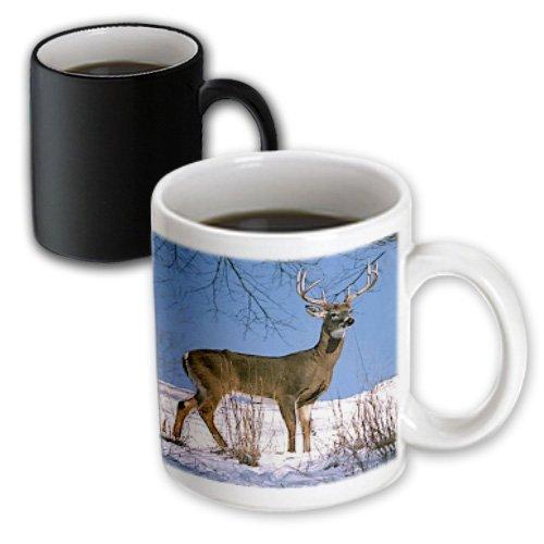 3dRose mug_721_3 White Tailed Deer Magic Transforming Mug, 11-Ounce