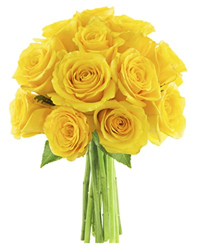 bouquet-of-sunshine-yellow-roses-12-fresh-cut-yellow-roses-by-kabloom