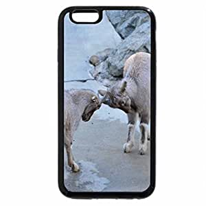 iPhone 6S Plus Case, iPhone 6 Plus Case, Goats play fighting
