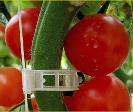 10-100x Plastic Trellis Tomato Veggie Greenhouse Garden Plant Vine Support Clips