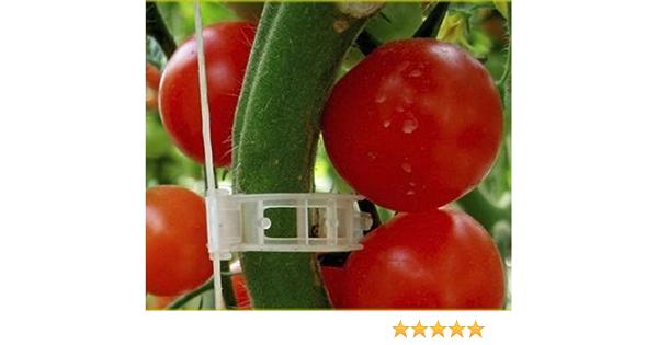 100pcs Tomato Veggie Garden Plant Support Clips for Trellis Twine Greenhouse NEW