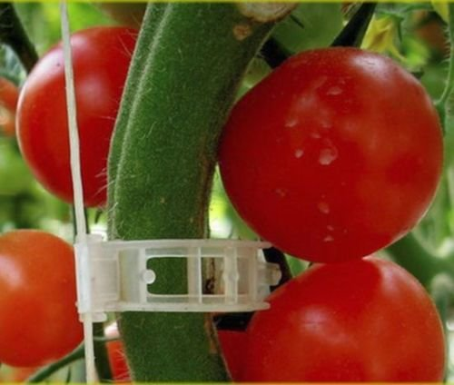 100 Xl Tomato and Veggie Garden Plant Support Clips for Trellis Twine Greenhouse ()