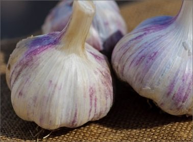 Hardneck Garlic Killarney Red - Cold Hardy w/ Tasty Scapes - 1/2 lb. bag - Garlic Bulbs for Planting!