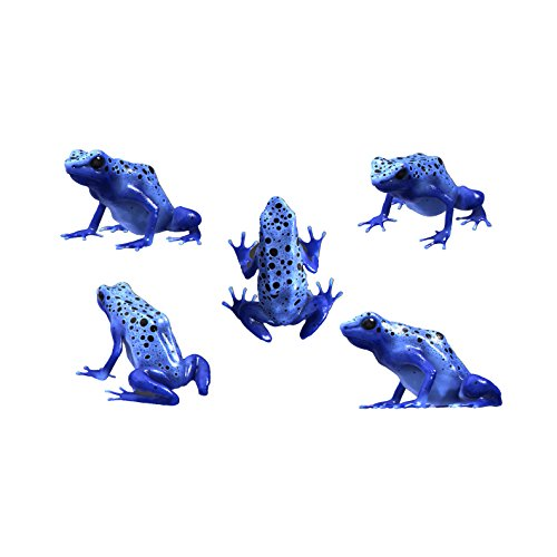 5-blue-poison-dart-frog-decals-sizes-shown-on-size-chart-below