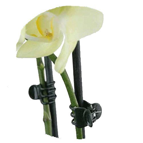 Orchid and Plant Spike Clips - Green 100 Pack - EBook Included (Orchid Spike)