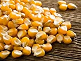 5 Pounds of CZ Grain NON-GMO Whole Kernel Corn - All natural yellow corn grown in Iowa. Great for tortillas or making meal. Squirrel Approved!
