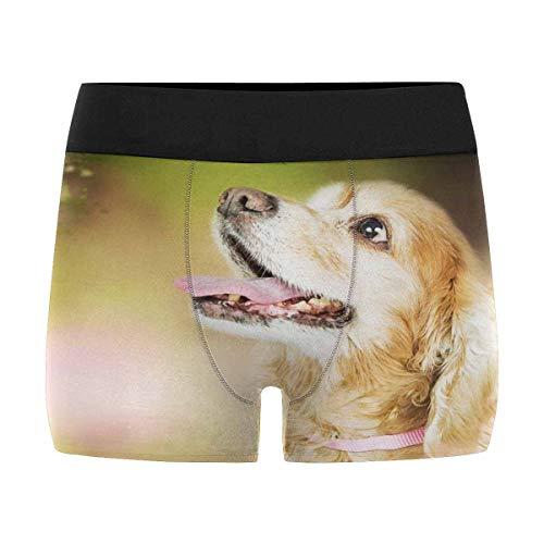 INTERESTPRINT Mens Boxer Briefs Underwear Cocker Spaniel Dog Looking Up at Flying Bee XXXL Cocker Spaniel Dog Underwear