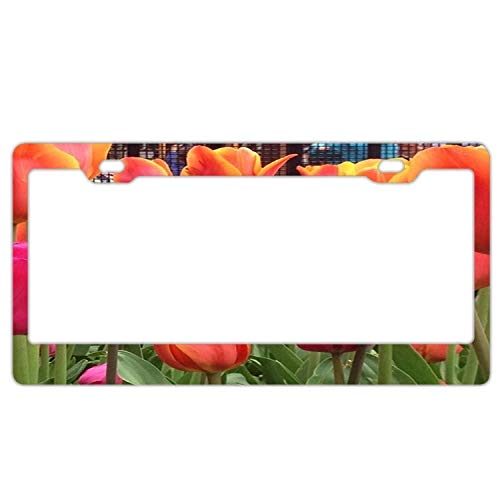 Chrome Tulip Frame (Orange Pink Spring Tulip License Plate Frame for Women, 2 Holes Stainless Steel License Plate Holder with Chrome Screw Caps - Car License Plate Covers for US Vehicles)