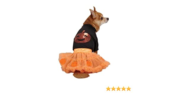 Dog Halloween Costume Scary Witch Costumes Dress Pet BRAND NEW Zack /& Zoey