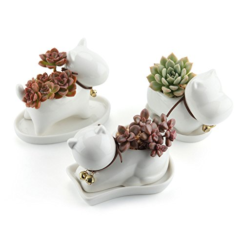 T4U Animal Paradise Ceramic Succulent Plant Pot/Cactus Flower Pots Container Porcelain Holder Planter Decoration with Golden Bell and Tray Collection 1# - Pack of 3]()
