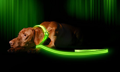Lead Dog Light - Illumiseen LED Dog Leash - USB Rechargeable - Your Dog Will Be More Visible & Safe - 6 Colors (Red, Blue, Green, Pink, Orange & Yellow) - Perfect To Use With Our Matching Collar (6 Feet, Green)