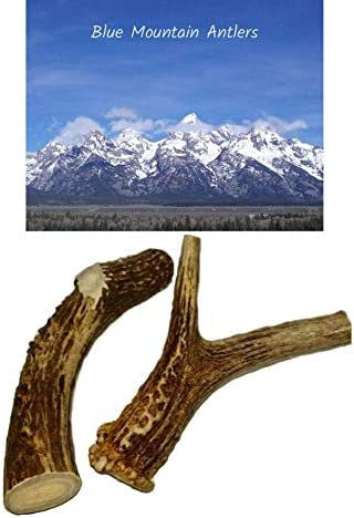 Blue Mountain Antlers Big Dog Antler Chews – 2 Pack XL Deer Antler Dog Chews – Extra Large, Thick, Jumbo – 6 Inches or Longer – for Large Dogs and Puppies Who are Aggressive Chewers
