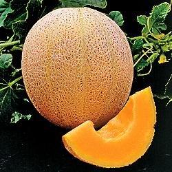 Seed Kingdom Cantaloupe Hales Best Jumbo Melon Great Heirloom Vegetable 3,000 Seeds (Cantaloupe Seeds)