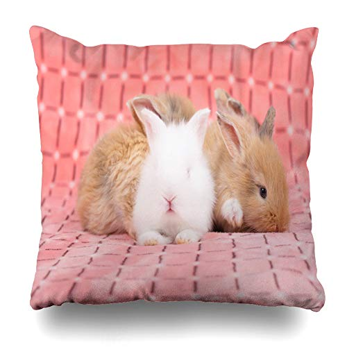 Covers Brown Adorable Young Baby Rabbit Pink As Weeks Old Little Fluffy Bunny Gray Home Decor Pillowcase Square Size 18 x 18 Inches Cushion Case ()