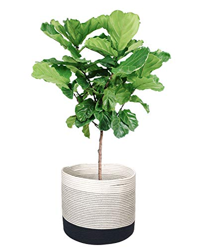TIMEYARD Woven Cotton Rope Plant Basket for 10in to 12in Flower Pot Floor Indoor Planters, 13.5