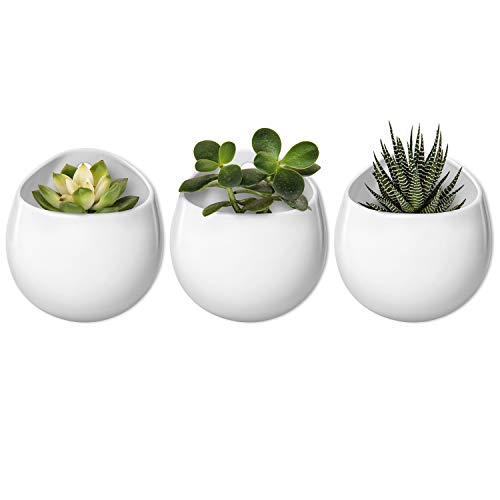 Mkono 4 Inch Wall Mounted Planter Round Ceramic Hanging Plant Holder Decorative Flower Display Vase Succulent Pots for Indoor Plants, Set of 3, White (Plants NOT Included) (Wall Planter)