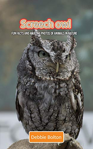 Owl Screech Farm - Screech owl: Fun Facts and Amazing Photos of Animals in Nature
