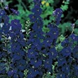 Outsidepride Larkspur Blue Spire - 1000 Seeds